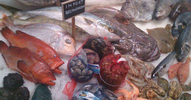 Ryby ikrewetki dla amatorów