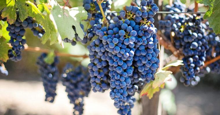 Mołdawia – wina nie tylko na słodko