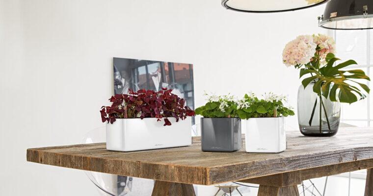 Najmodniejsze rośliny doniczkowe – gatunki, sadzenie, pielęgnacja